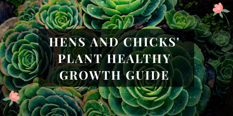 Hens and Chick Plant