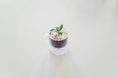 Hoya Plant Propagation