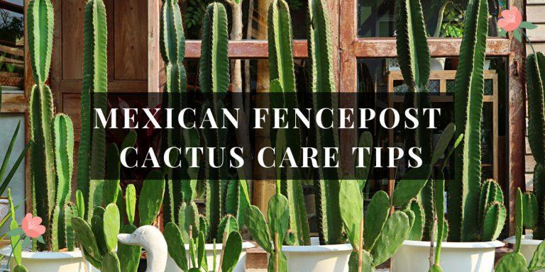 Mexican Fencepost Cactus