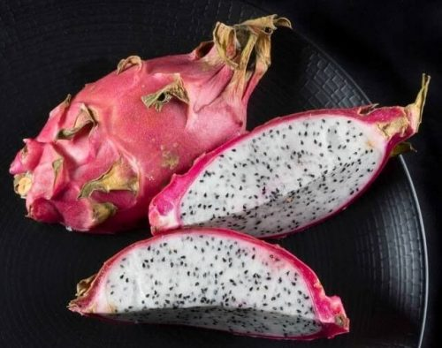 Start With Your Own Dragon Fruit Tree
