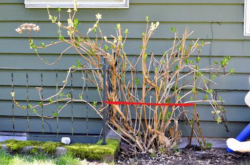 Take Care of Hydrangea Tree