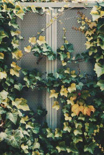 Vertical Urban Gardening
